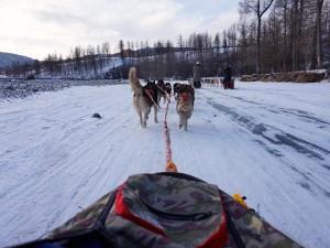 Terelj-Huskies-07
