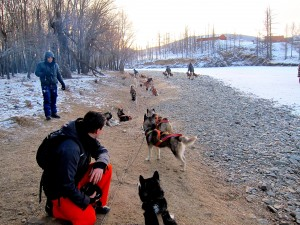 The dogs take a break after a hard 90 minutes sledding