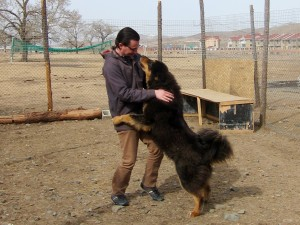 Mongolian Bankhar demands kisses!