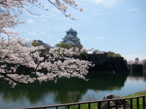 Cherry trees line the edge of the moats which surround Osaka Castle.