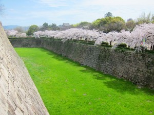 The lawns which line the emptied moats around Osaka Castle provide a striking colour contrast to the stonework, the cherry blossoms, and the sky.